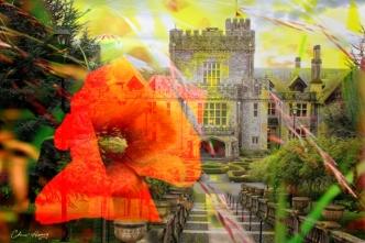 composite poppy and Hatley castle: Christine Henry Arts Photo